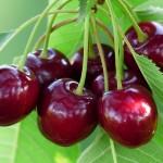 afvallen met fruit kersen